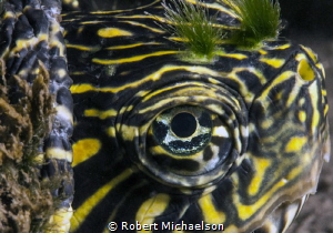 Slider turtle in the Comal River. New Braunfels, TX. by Robert Michaelson